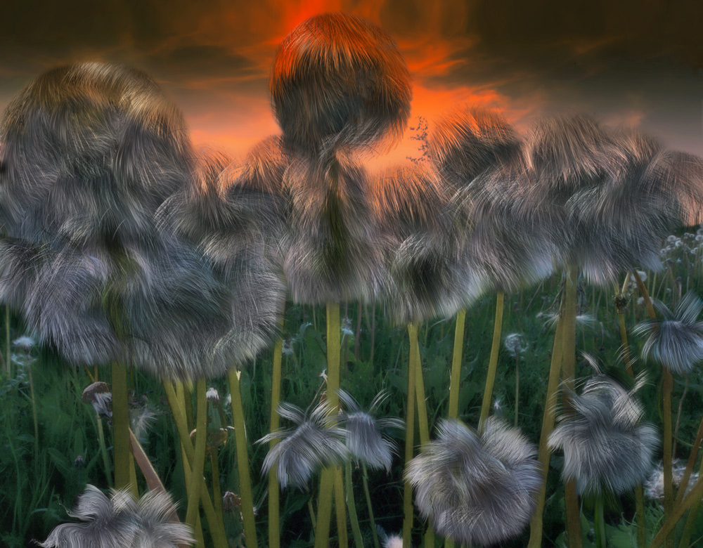 Fairy dandelions | art, grass, dandelions, stalk, downy, sky, scarlet, field, imagination, spring