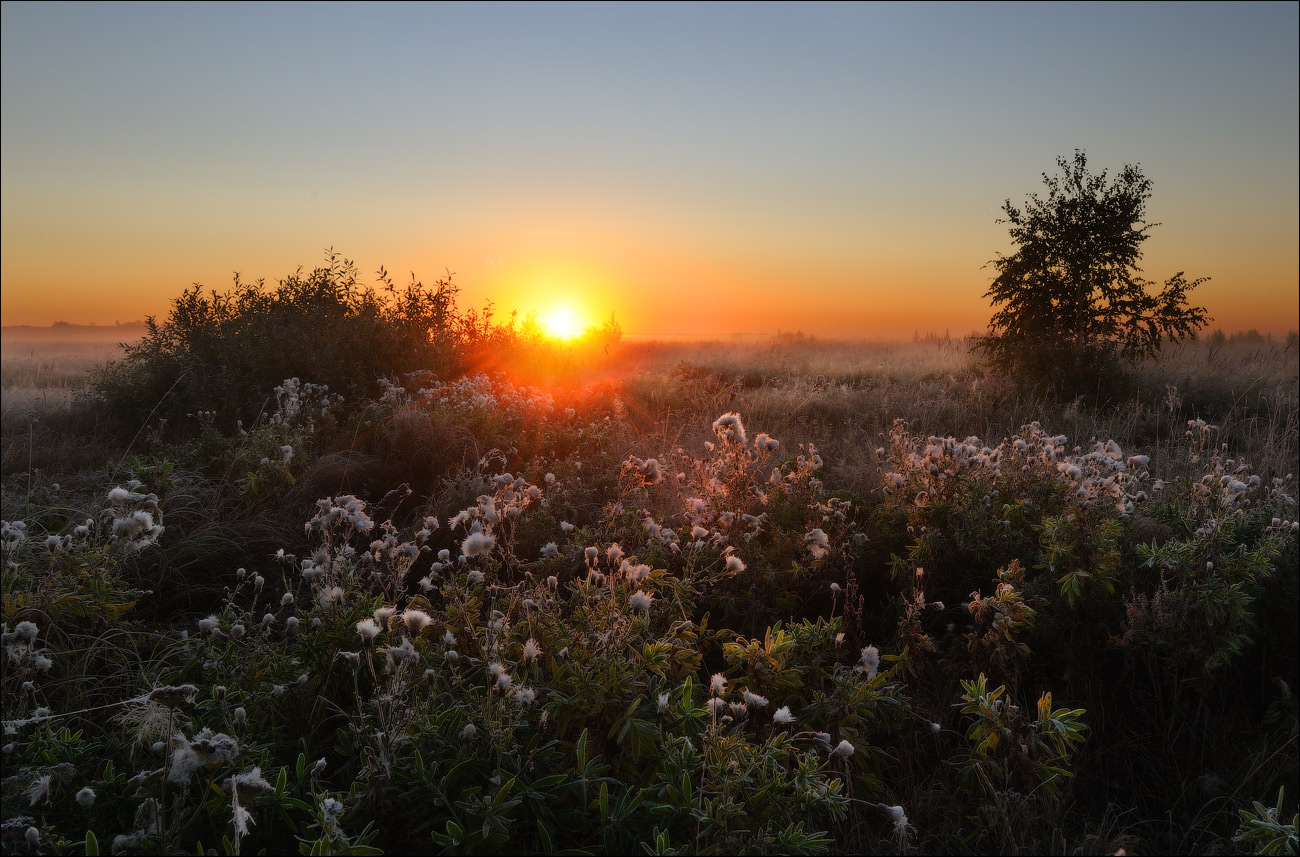 Morning in the field | landscape, sun, horizon, dawn, fog, scarlet, morning, field, grass, flowers