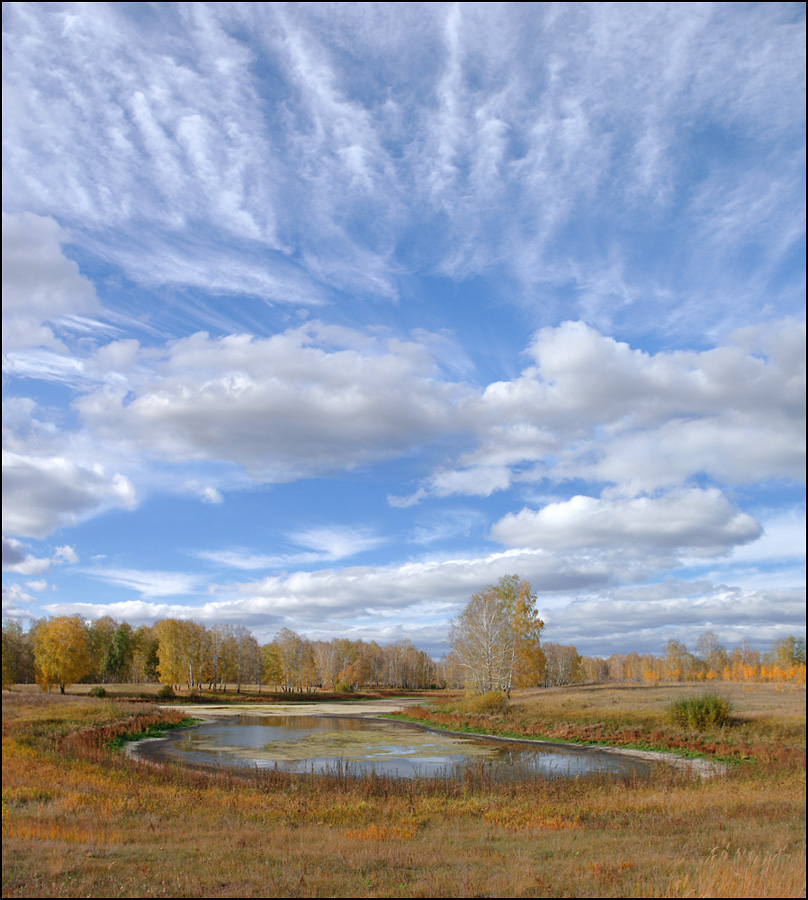 Puddle in the middle of a filed | puddle, birch, grass, field