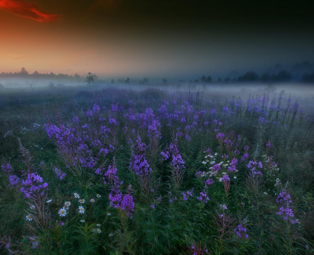 Morning fog | dawn, fog, grass, field