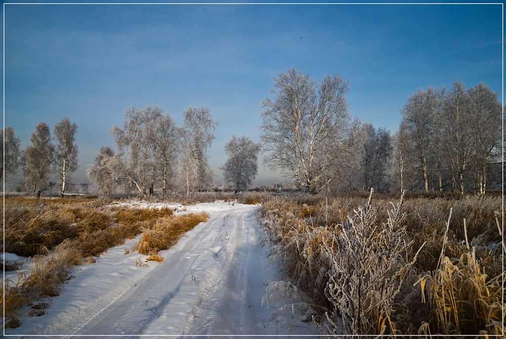 Snowy road | road, field, birch, winter