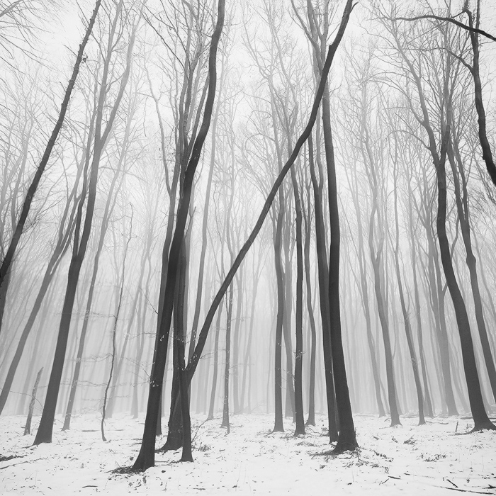 Bare trees | tree, winter, snow, haze