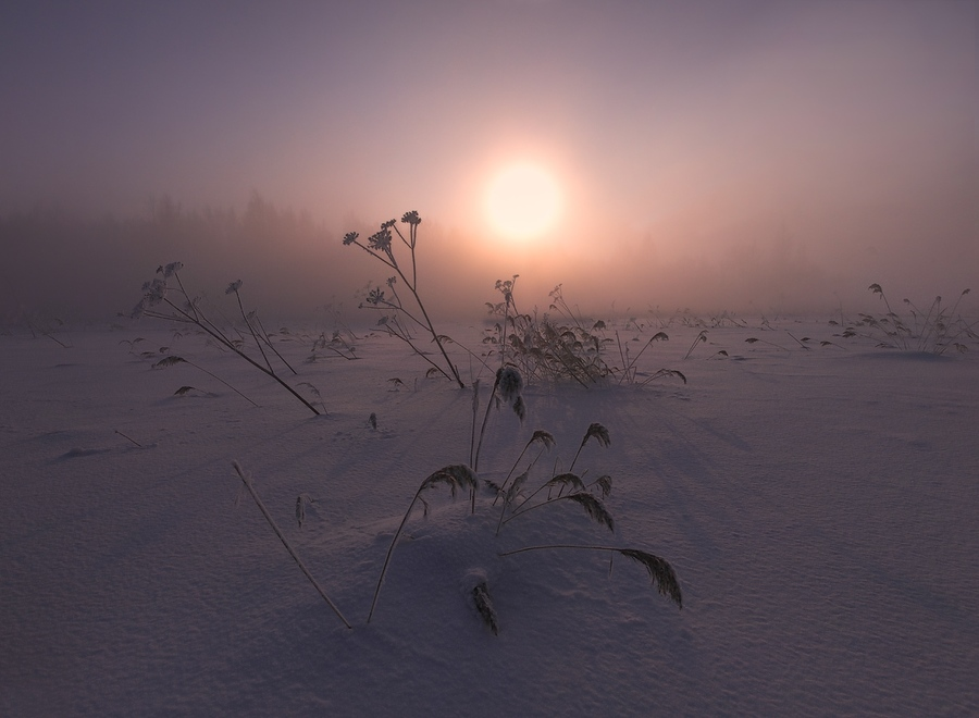 Foggy morning | fog, sunlight, winter, field