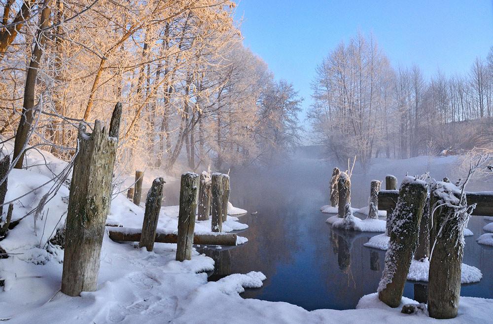 Stumps | stump, tree, winter, frost