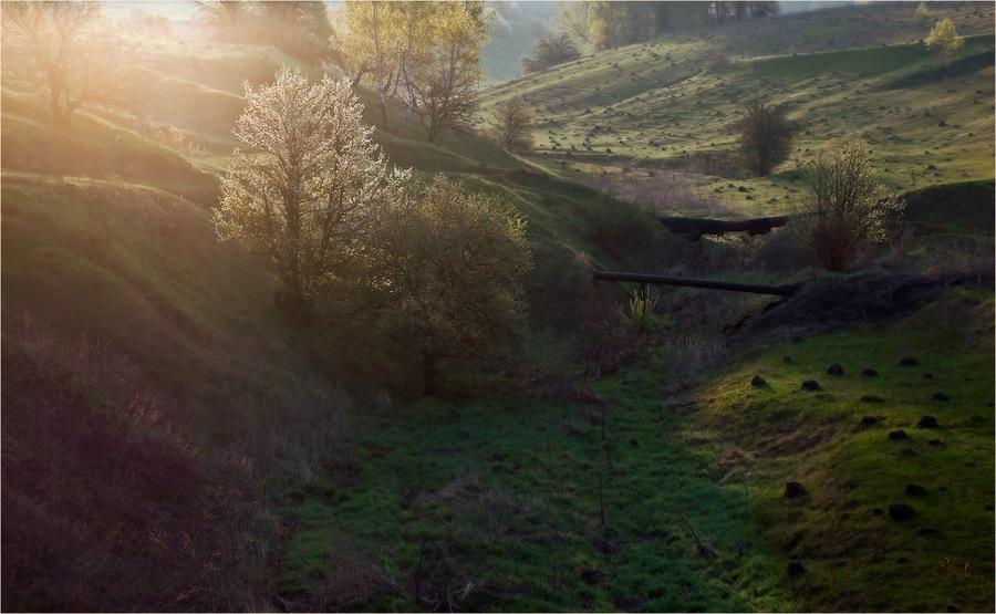 Foggy hills   fog, hill, spring, flowery meadows