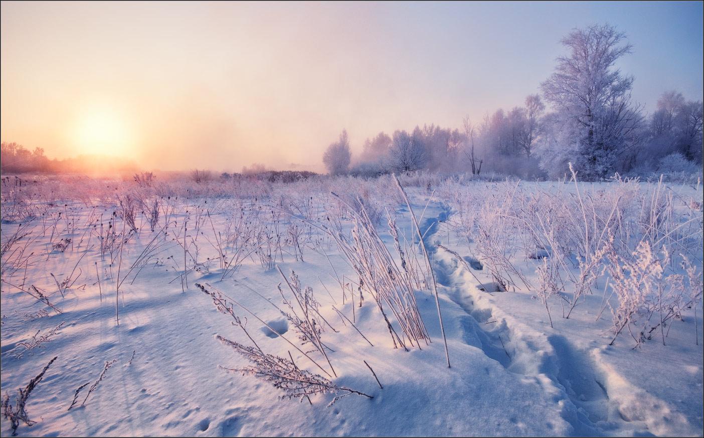 Snowy field | snow, field, forest, sun