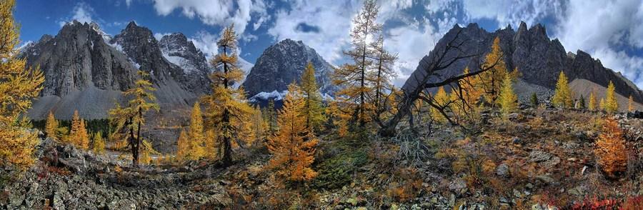 Altaian mountains | Altai, mountain, birch, tree