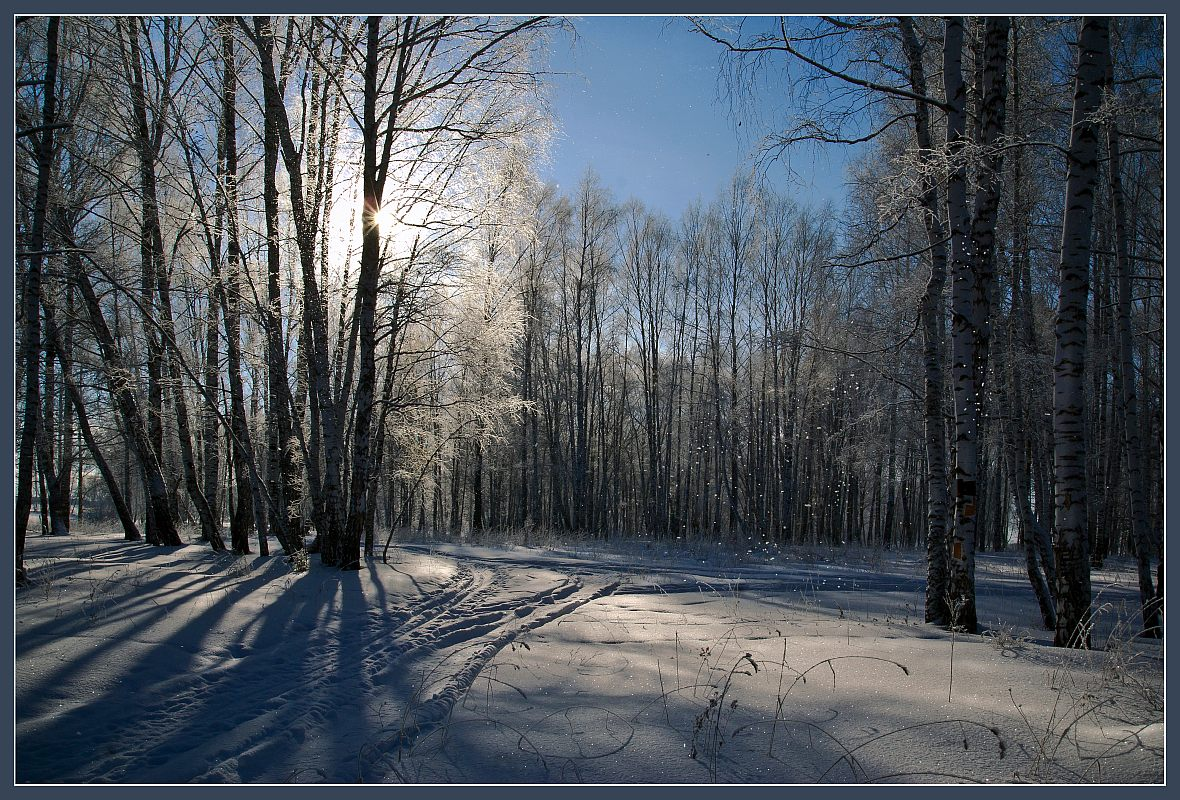 Sunny winter day in the forest | landscape, outdoor, nature, winter, snow, forest, sun, trees, sunny day, sky