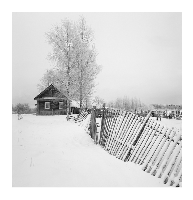 Birches covered with snow | winter, house, wooden, snow, birch, fence, destroyed, old, day, sky