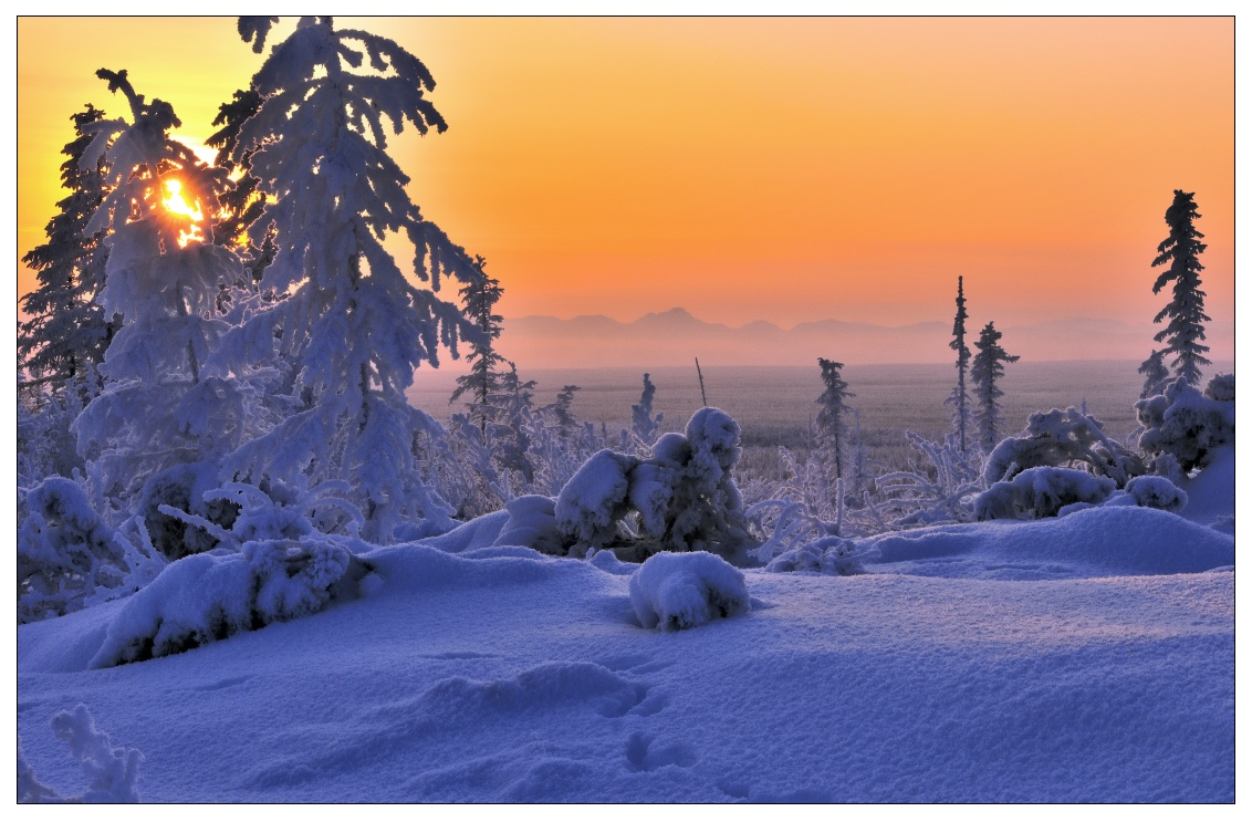 Winter dusk | dusk, winter, spruce, snow