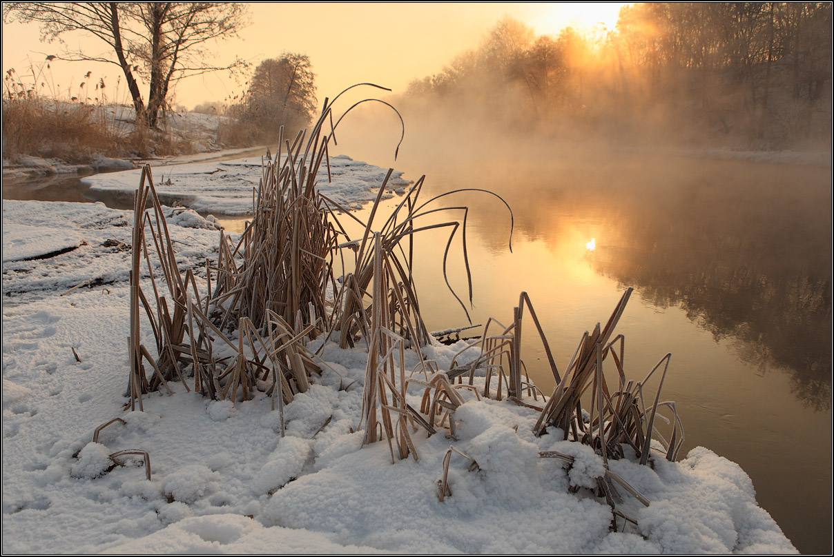Winter river | landscape, nature, river, winter, frost, water, sun, trees, snow, canes