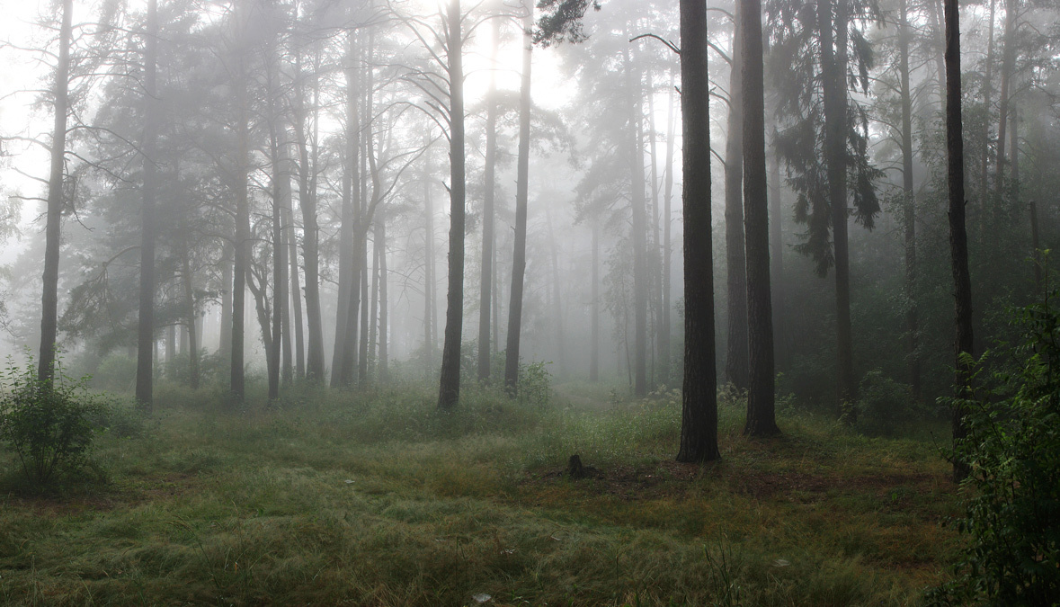 Mysterious foggy morning in the forest | landscape, nature, forest, trees, fog, morning, panorama, grass, sky, mysterious