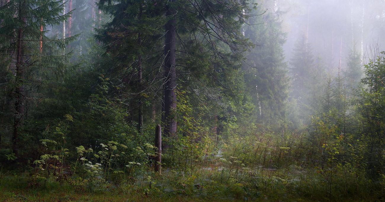 Mushroom place | mushroom, spruce, light, mist