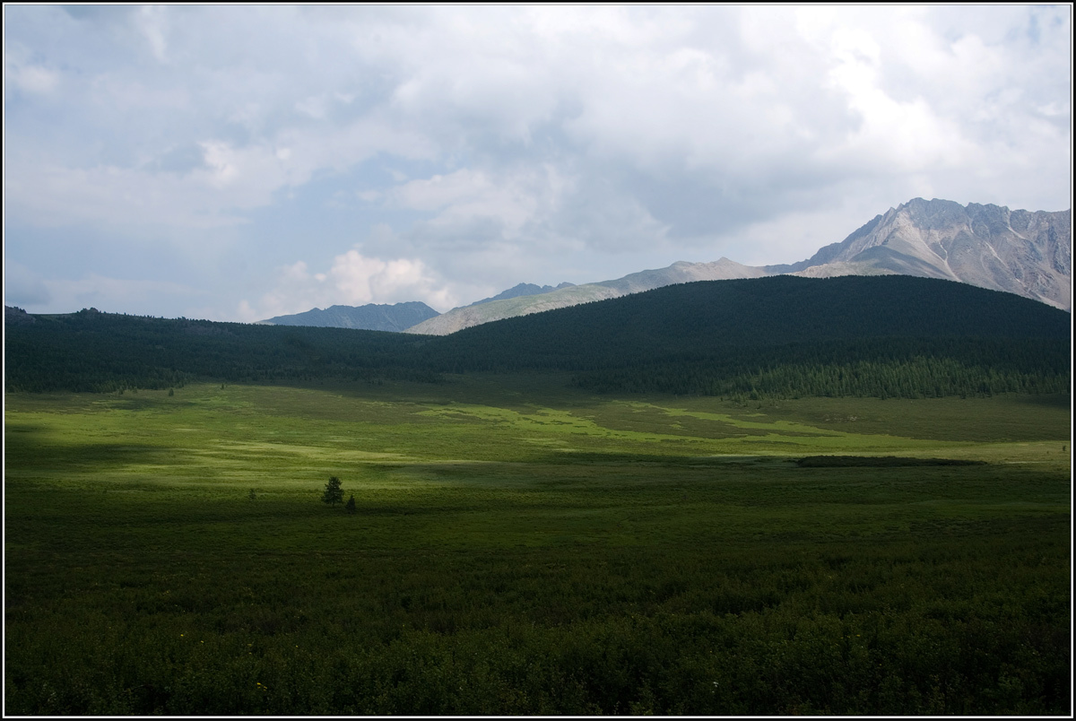 In the vast expanses of Altai | landscape, nature, hills, mountain, grass, shadow, sky, clouds, Altai, tree