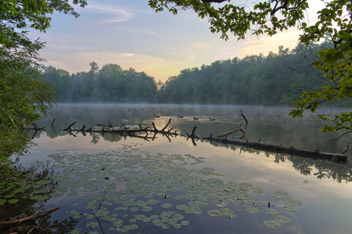Steaming lake | lake, dawn, wood, water-lily