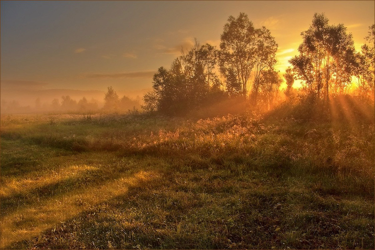 Golden dawn | sunrise, dawn, birch, field