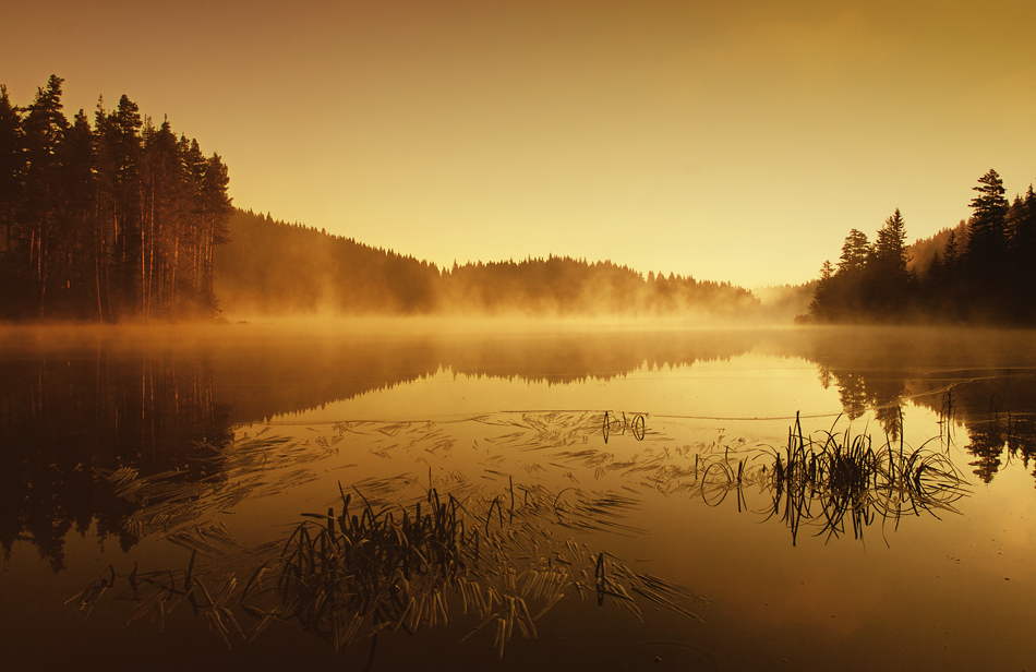 And the sun rises... | dawn, sunrise, pond, water