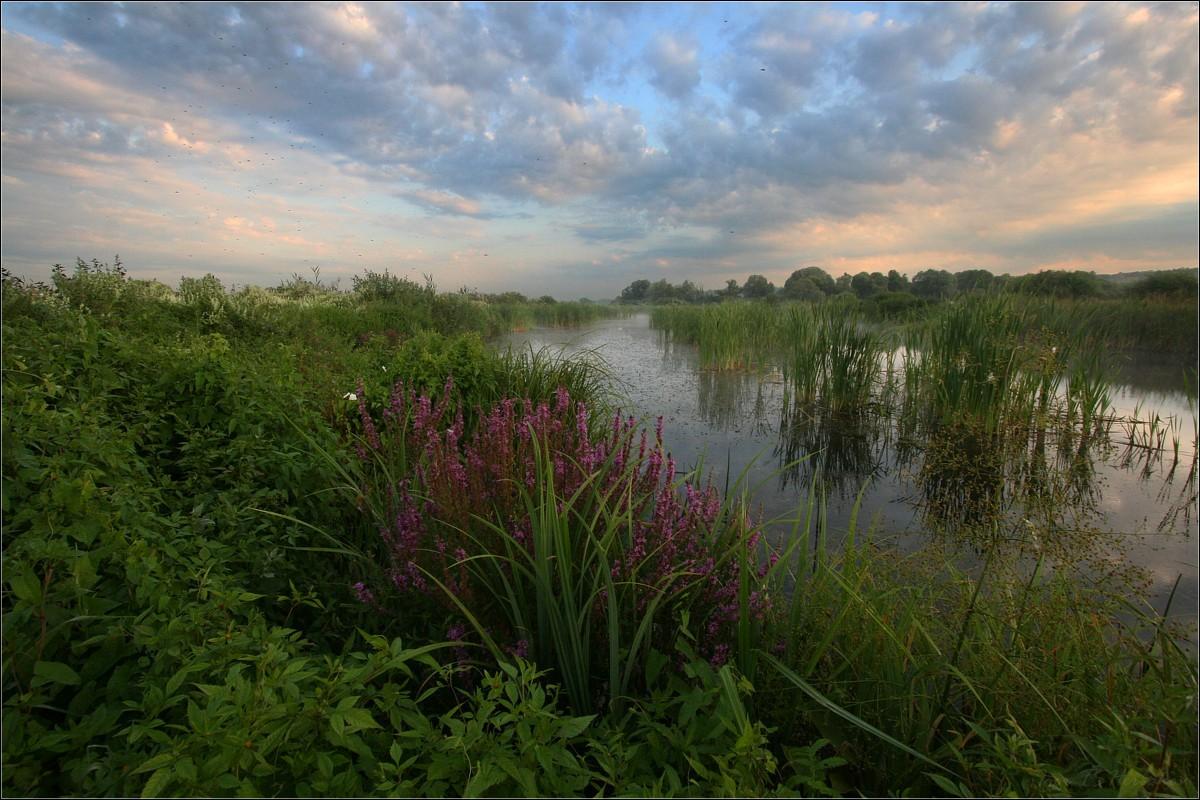 Mosquito's heaven | heaven, grass, bog, sky