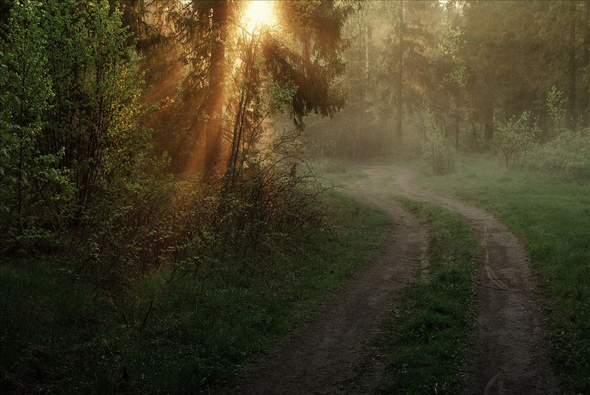 In the morning forest | outdoor, nature, landscape, forest, morning, sunrise, grass, trees, light, path