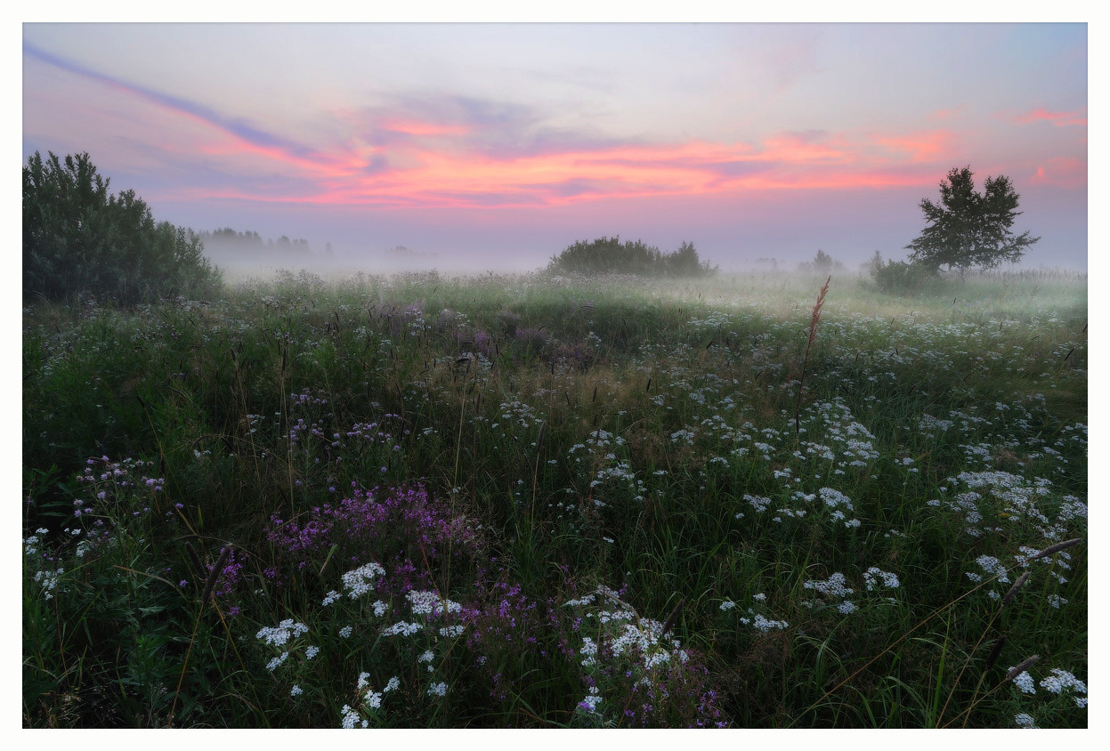 Lilac morning | morning, meadow, dawn, grass