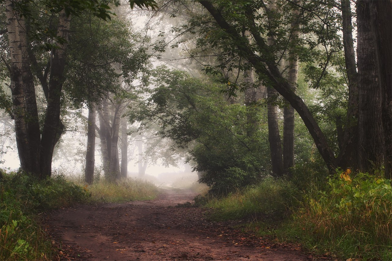 Path through the wood | path, wood, tree, haze