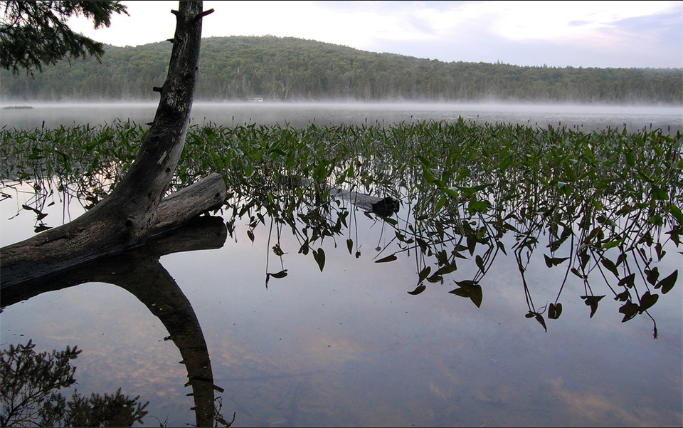 Landscape, fog on a lake  | landscape, forest, water, fog, line, bough, hydrophyte, reflection, sky, green