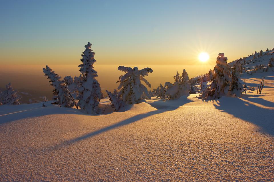 Orange mood   spruce, snow, winter, sun