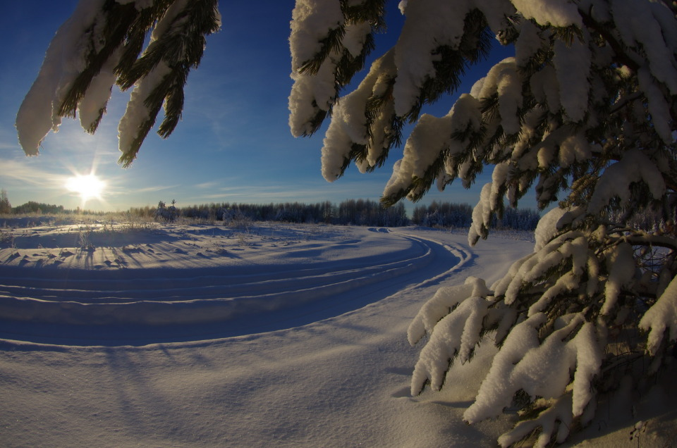 Branches of fir in snow | landscape      , nature, winter, snow, frost, sun, forest, sky, fir, branches