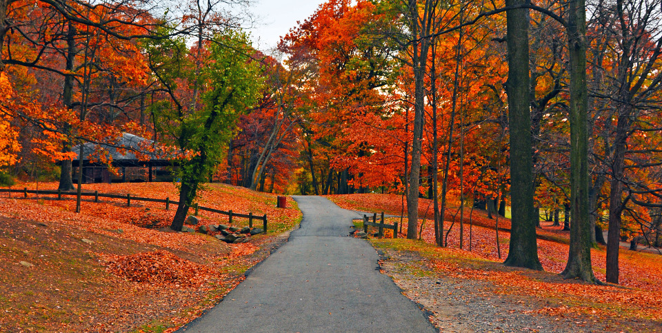 Autumn park | autumn, park, trees, leaves, arbor, parkway, green, red, stones, colourful