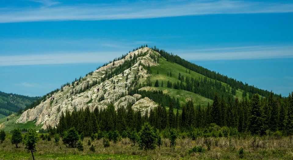 White-green mountain | mountain, hillside, spruces, grass