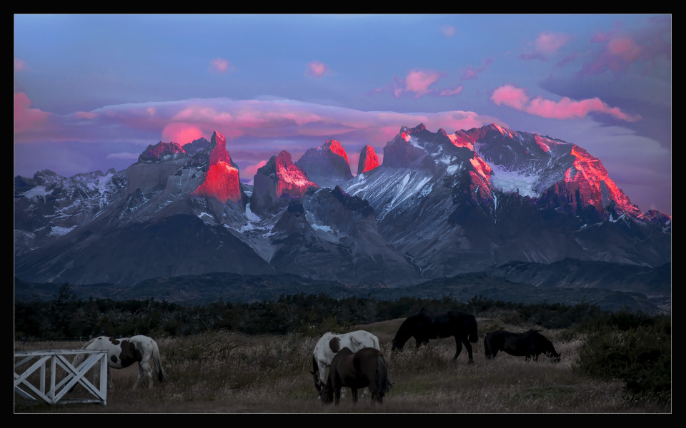 Torres del Paine National Park, dawn | National Park, Patagonia, mountains, sky, horses, grass, scarlet, dawn, uprise, clouds