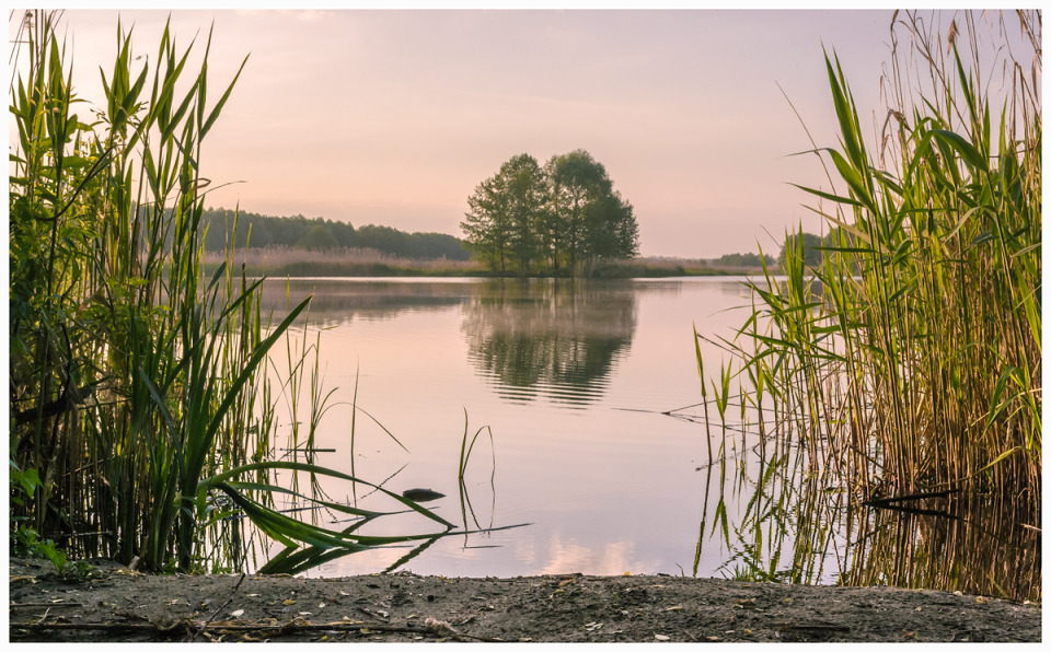 Silence on the lake  | landscape, nature, lake, water, sky, trees, forest, cane, evening, summer