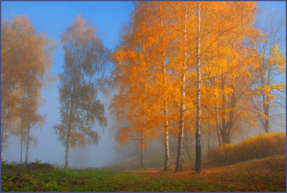 Golden birches in fog   landscape, nature, autumn, golden, trees, birches, grass, fog, leaves, sky