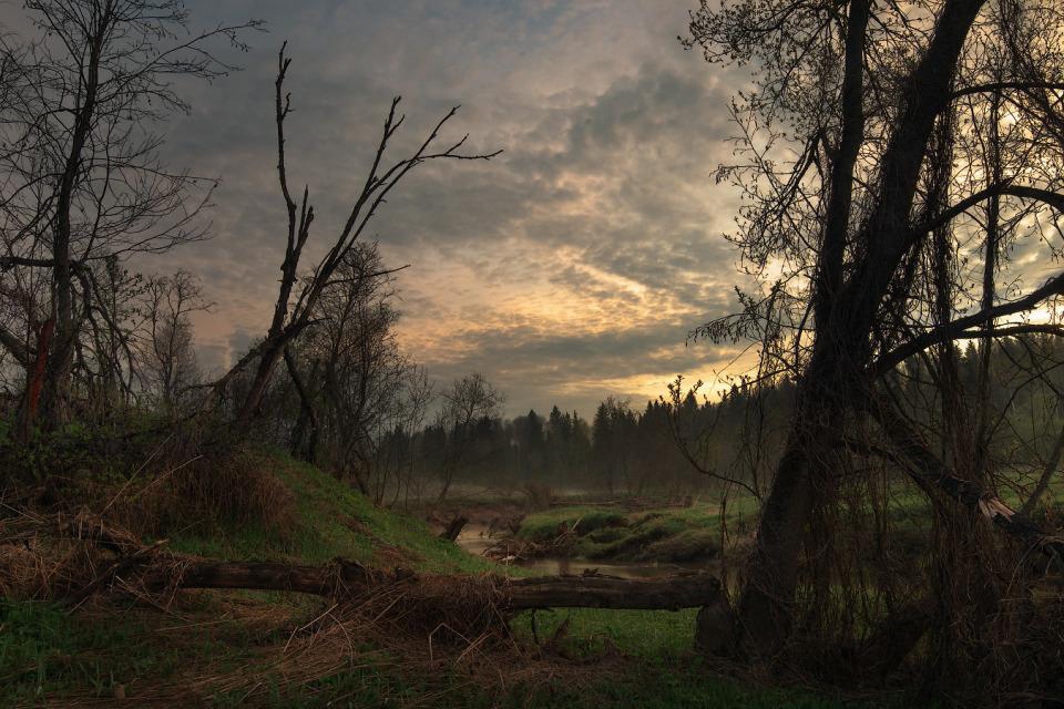 Darkly day | Dmitrov, nature  , landscape , trees, crack, grass, sky, forest, darkly, water