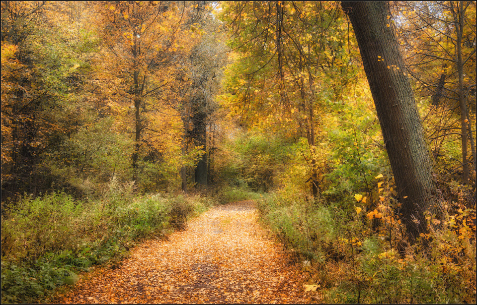 Autumn forest, Optina Hermitage | landscape, nature, autumn, forest, trees, leaves, golden, path, grass, Optina Hermitage