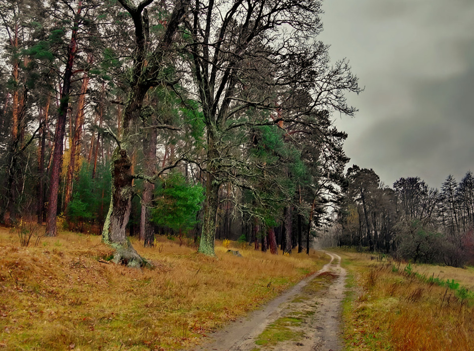 Path in the autumn forest | landscape, outdoor, nature, autumn, forest, sky, trees, path, grass, dull